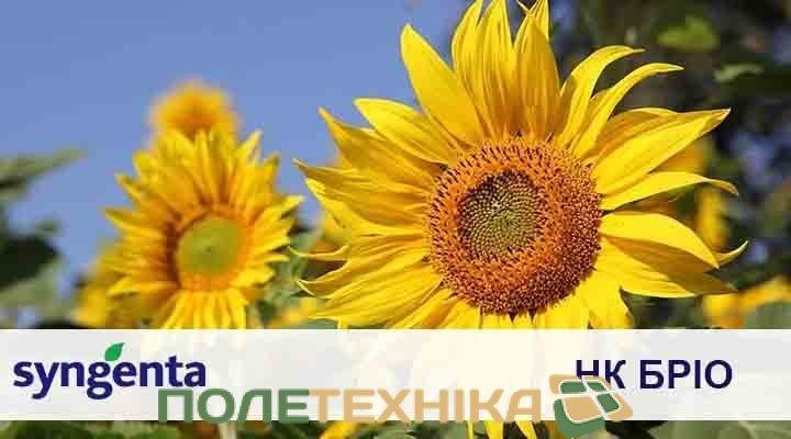 Соняшник НК БРІО Syngenta від Полетехніка
